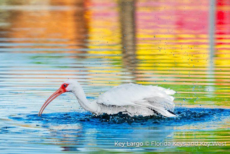 6_JUNE_Key Largo_Bird Bath 25Jun21