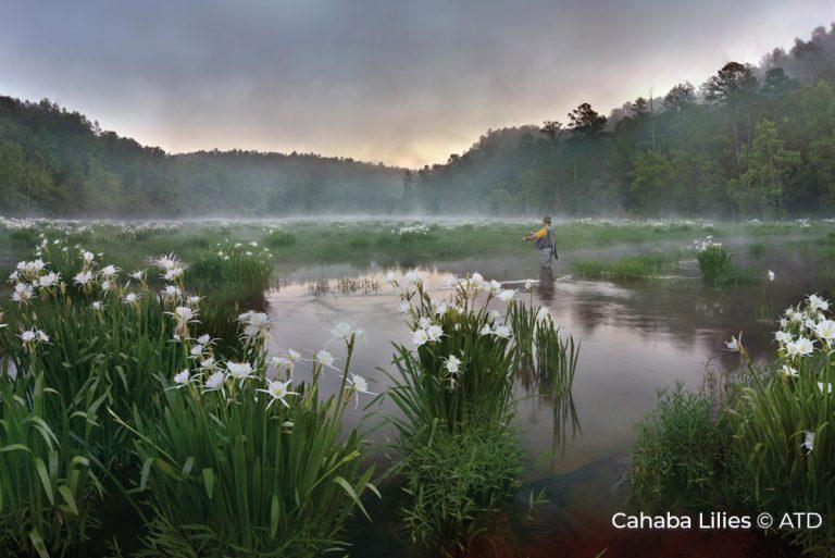 Cahaba Lilies Alabama Credit ATD